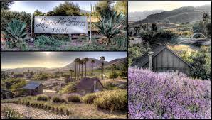 kclfarm u2014 keys creek lavender farm photography gallery