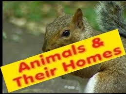animals homes names types lesson for kids kindergarten