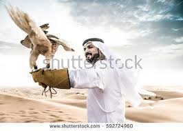 falconry stock images royalty free images vectors