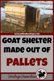 best 20 goat shelter ideas on pinterest pygmy goat house goat