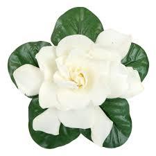 gardenia flower gardenia wedding flower