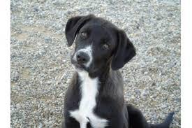 cani in cerca di casa 4 cuccioli in cerca di casa cucciolo nato nel 2016 adica