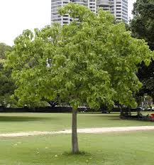 trees are also native plants 15 hawaii native plants perfect for landscaping total landscape