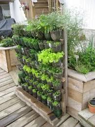 Watering Vertical Gardens - build a vertical garden from recycled soda bottles soda bottles