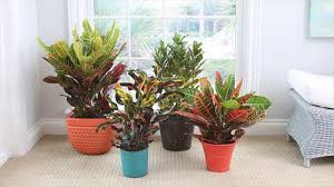 hardy shade tolerant plants indoors low light indoor varieties
