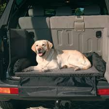porta cani per auto trasporto cani in auto consigli pratici e obblighi di legge