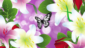 flowers blessing lilies liliesnfp butterfly flowers summer easter