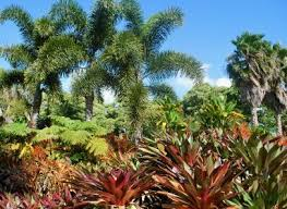 Tropical Plants For Garden - how to protect tropical plants in the winter lovetoknow