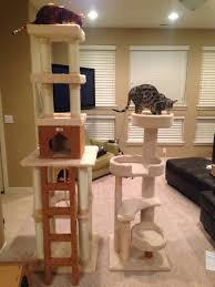 Cool Cat Furniture Jdcargile Com New Cat Tree For The Bengals