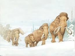 columbian mammoth kind