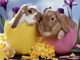 easter facts trivia 25 funny curious and interesting facts about easter you may not know