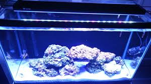 current usa orbit marine aquarium led light current usa marine orbit