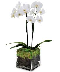 easy plants indoor green plants u0026 orchid care city line florist