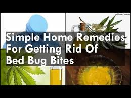 Bed Bug Home Remedies Simple Home Remedies For Getting Rid Of Bed Bug Bites Youtube
