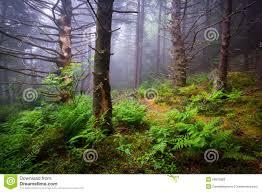North Carolina scenery images Scenic forest hiking appalachian trail north carolina nature lan jpg