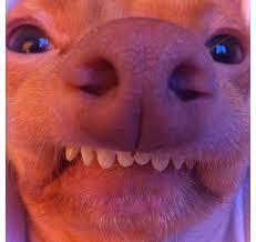 Tuna The Dog Meme - tuna dog phteven