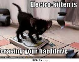 Funny Kitten Memes - black kitten memey com