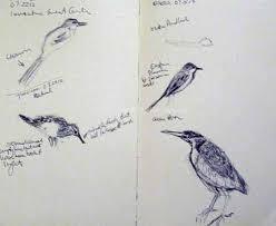 art birds nature late summer bird sketches