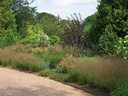 don t overlook the subtle of ornamental grasses