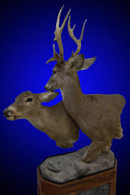 Deer Pedestal North American Taxidermy Creative Concepts Taxidermy Taxidermy