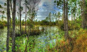 la florida cary state forest