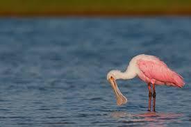 the canon eos 7d mark ii does pink arthur morris birds as art