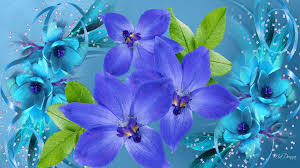 purple and blue flowers blue and purple flowers 380256 walldevil