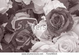Black Roses For Sale Roses At Flower Stalls Stock Images Royalty Free Images U0026 Vectors