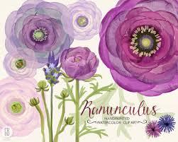 Bouquet De Bonbons Aquarelle by Fleurs De Renoncules Aquarelle Violet Lavande Peint à La