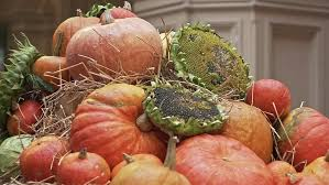 happy thanksgiving day harvest and fall concept many beautiful
