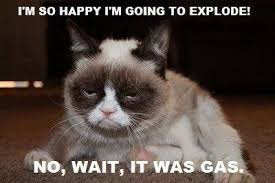 Happy Cat Meme - i m so happy cat meme cat planet cat planet