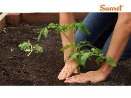 Climate Zones For Gardening - sunset climate zones san diego region sunset