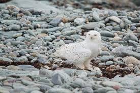 Rhode Island wildlife images 14 photos of rhode island wildlife jpg