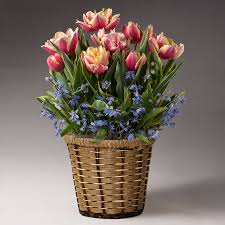 flower gift live gift plants plant flower gifts that just grow in beauty