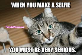 Selfie Meme - how to make a selfie advice from a cat funny cat meme