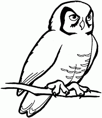 pictures of owl coloring pages printable free coloring book picture