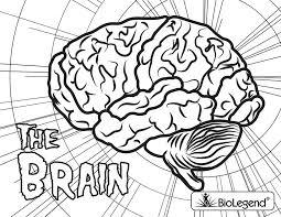Biolegend Legendary Coloring Book Brain Coloring Page