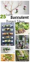 diy project ideas 23 succulents plants indoor plants indoor