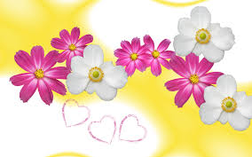 flower love wallpaper in yellow