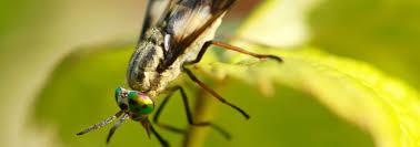 moucheron cuisine moucherons dans ma cuisine image intitule get rid of gnats in the