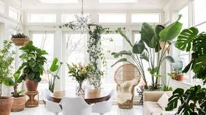 how to inject life indoors with the right houseplants fox news