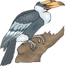 bird large hornbill branch png image pictures picpng
