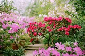 spring flower forcing spring flowering bulbs for winter color