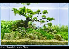 Aquascape Moss 27 Best Acuascaping Images On Pinterest Aquascaping Aquarium