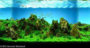 landscaping oceanmax aquarium co limited