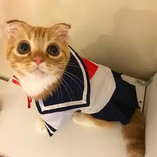 cat diy halloween costumes brit co