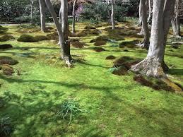 how to create a zen garden in your backyard u2013 bob hobbs u2013 medium