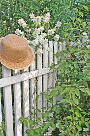Picket Fences 384 Best Fences And Flowers Images On Pinterest White Picket