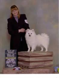 miniature american eskimo dog life expectancy pin by the dog parents on american eskimo dog pinterest