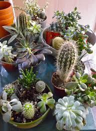 diy succulent terrariums how u0027s it going eh